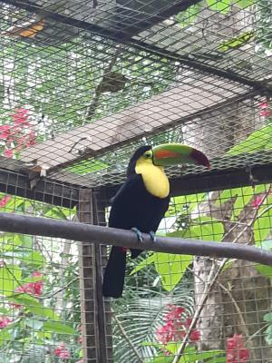 Lokaal vogel-opvang-park.