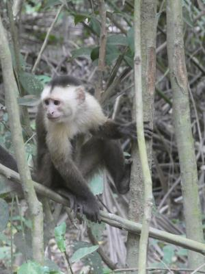 Apen tijdens de wandeling door Tayrona NP.