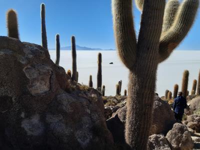 Cactuseiland (voor 't geval het onduidelijk was)