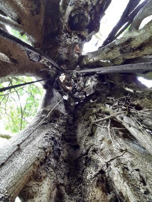 """Letterlijk """"de boom in"""""""