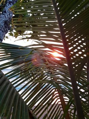 Corcovado: Zonsondergang door de palmen/varens.
