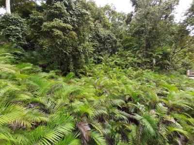Door 'Parque nacional Manuel Antonio', mooi park.